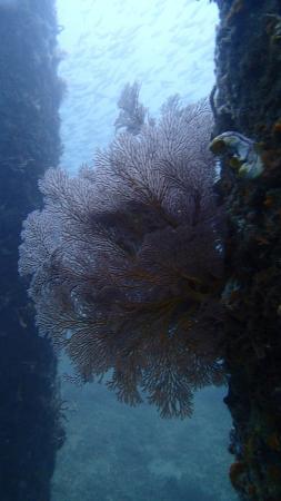 Zen Dive: Pilars