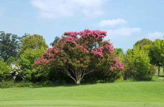 George Golf Club: Stunning blossoms