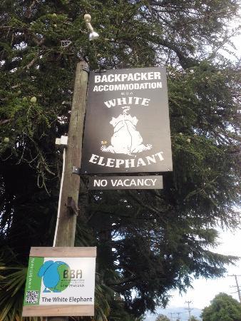 White Elephant Backpacker Photo