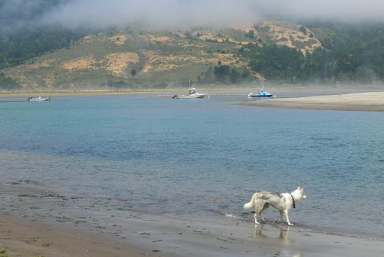 Olema, Kalifornia: dog at the lagoon