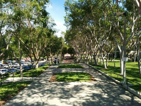 CSULB Picture of California State University Long Beach Long