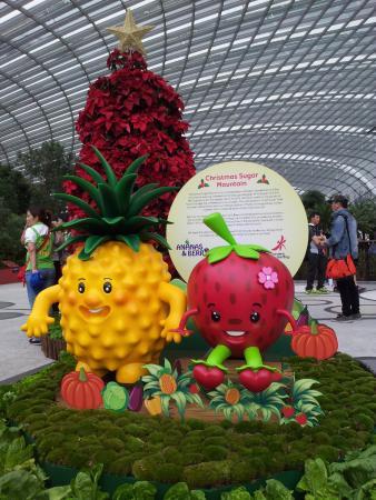 Indoor Garten In Singapur - Design Ideen