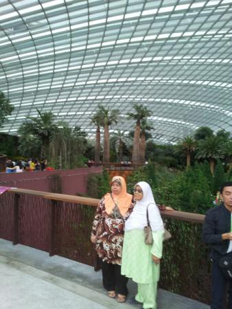 vertical garden indoor singapore vertical garden indoor diy ...