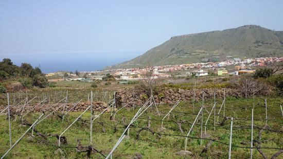 Wine Experience Tenerife