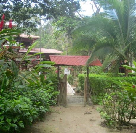 Convergence of the rainforest, beach and Agapi Lodge