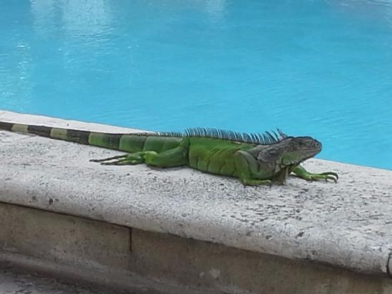 sunbather by the pool picture of richmond hotel miami beach rh tripadvisor com