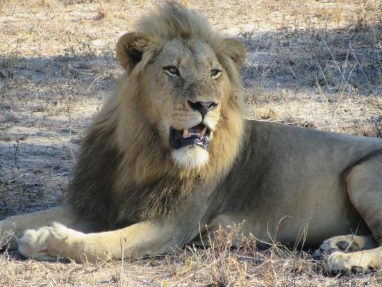 Foto de Mala Mala Private Game Reserve