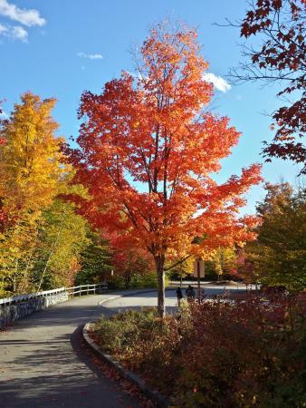 Franconia, NH: Foliage at Flume