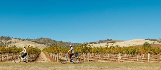 Barossa Valley, Australien: Cycling