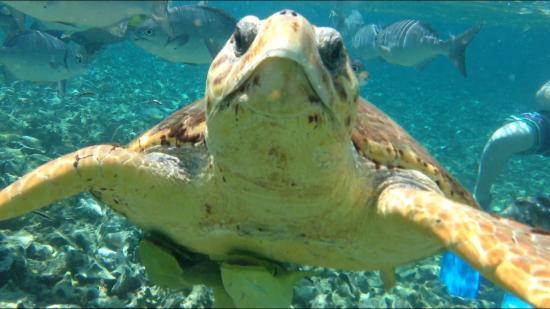 Stressless Aquatic Tours