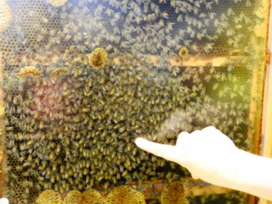 Vernon, Kanada: Queen bee