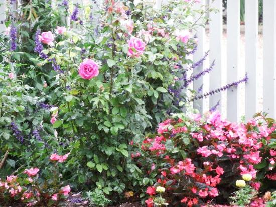 The Rose Garden: Our garden in March 2016