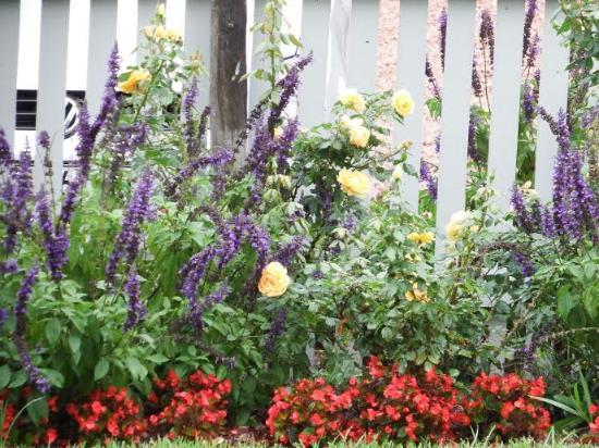 In our garden at The Rose Garden