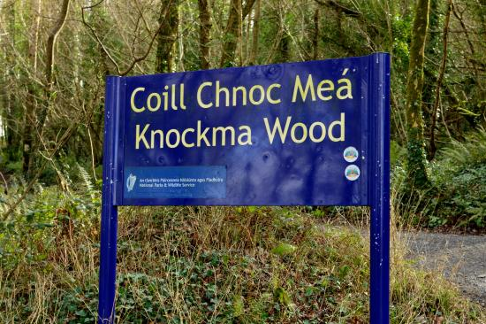 Tuam, Ireland: Knockma Wood, Galway