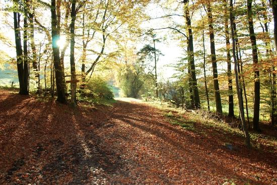Extertal, Deutschland: Forest walks