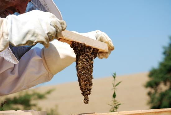 Extertal, Deutschland: Bees