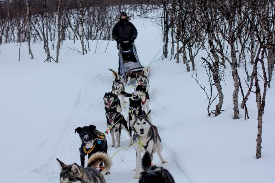 Finnmark, Norge: Husky trip