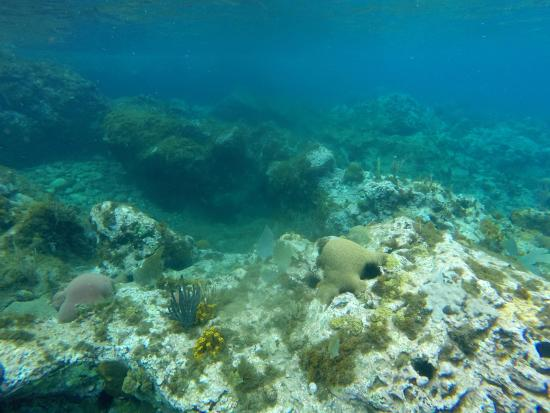 reefs day debacle - photo #1