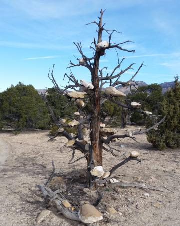 Price, UT: Luke's trademark - many trees with balanced rocks