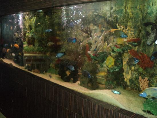 Mayfair Lagoon: Fish Aquarium
