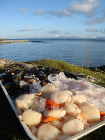 Isle of Eigg, UK: Fresh seafood