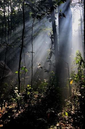 Dzanga-Sangha Reserve : Magical atmosphere