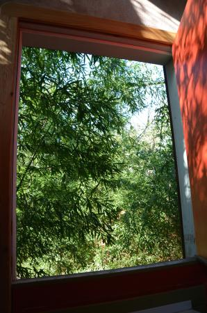 "Casa Kenwood Guesthouses: This is the view out the window I call ""barn door"". Bamboo, I think! So secluded!"