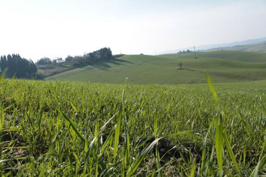 L'Albergaccio : The Albergaccio's view