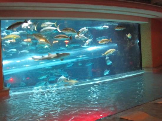 Swimming Pool View Of The Fish Tank - Picture of Gordie Brown, Las ...