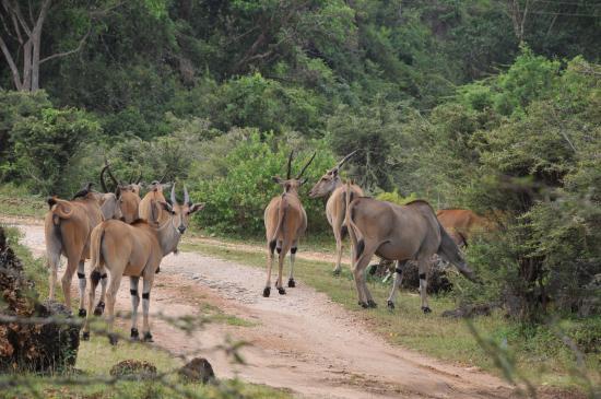Safari Talk Day Tours: Ansızın karşınıza çıkabilir.