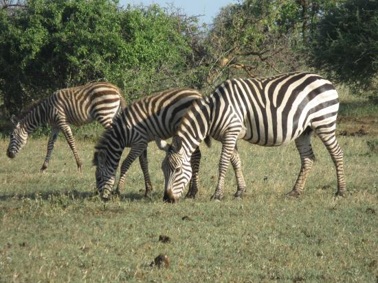 Finch Hattons Luxury Tented Camp Photo