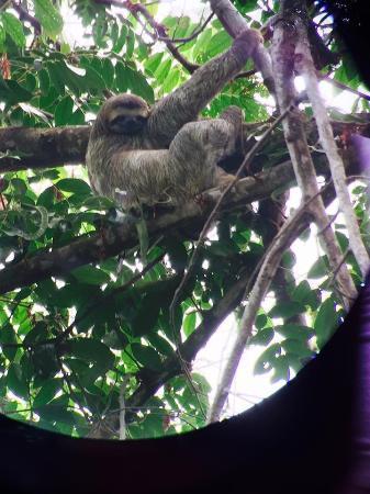 Costa Rica Jade Tours: photo2.jpg