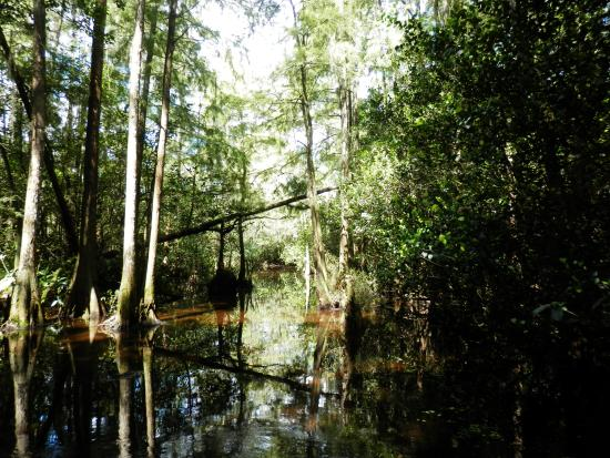 Everglades City, Φλόριντα: 40 odd miles into the Everglades....