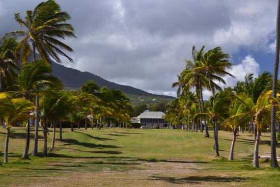 Newcastle, Nevis: Avenue of the Palms leading to Great House