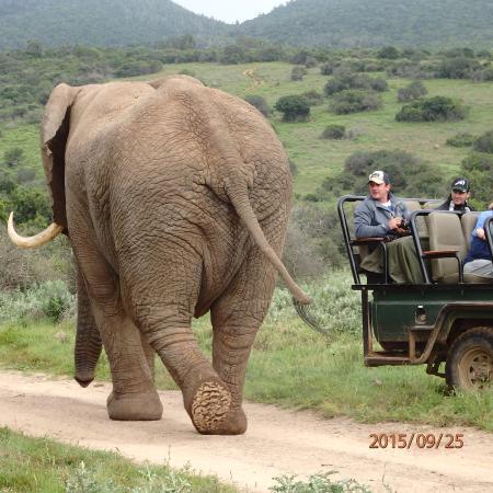 Kariega Game Reserve ภาพถ่าย
