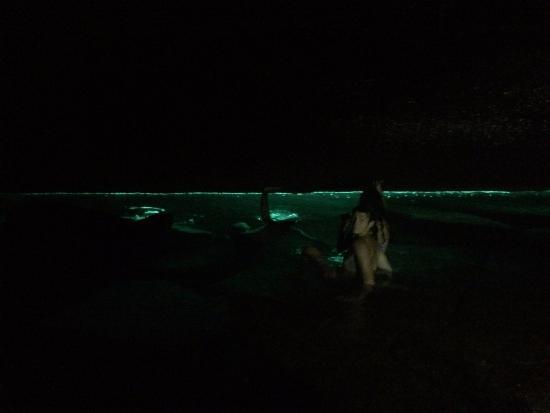 Abraao Cove: pessoal mergulhando para ver os peixinhos