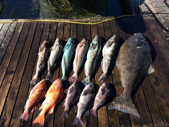 Tofino 1st Class Fishing