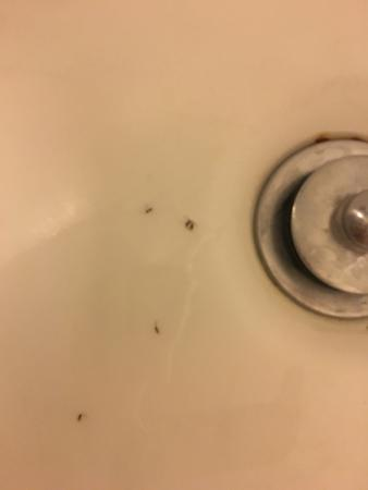 Motel 6 Long Beach - International City: Roaches in the tub