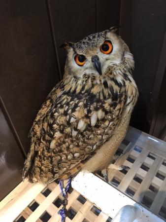 Wata Wata Owl Cafe
