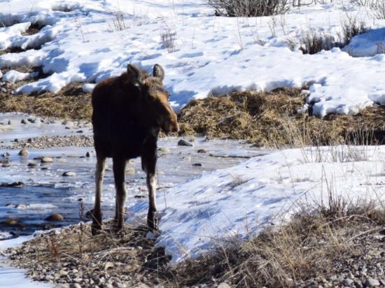 Wildlife Safari at Spring Creek Ranch - Private Trips