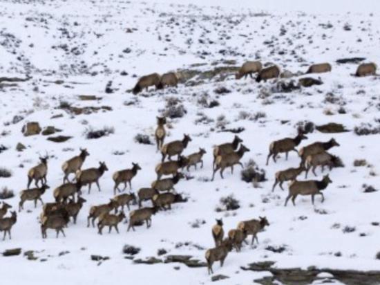 Wildlife Safari at Spring Creek Ranch - Private Trips: Safari @ Spring Creek 3