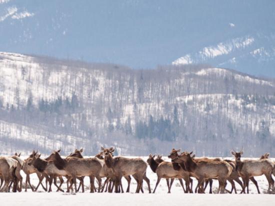 Wildlife Safari at Spring Creek Ranch - Private Trips: Safari @ Spring Creek 2