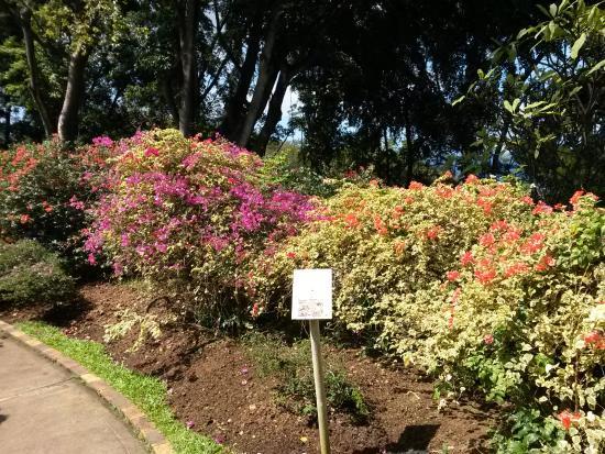 Des Massifs Fleuris Picture Of Jardin Botanique De Deshaies Deshaies Tripadvisor