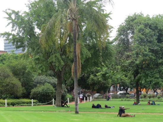 Burgers Park: Palm trees in the park