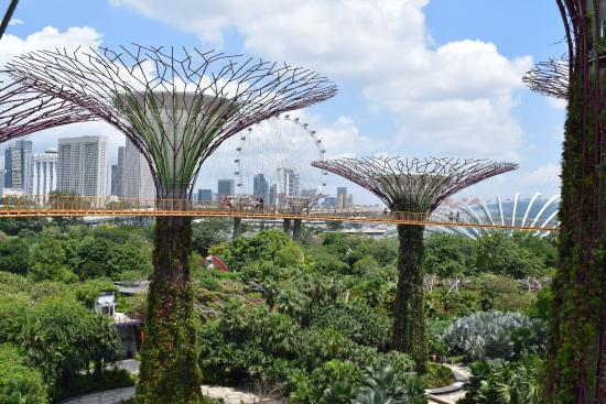 Gardens by the bay skywalk picture of gardens by the bay singapore tripadvisor - Garden by the bay flower show ...