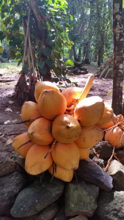 Idle Tours: Les cocos à déguster