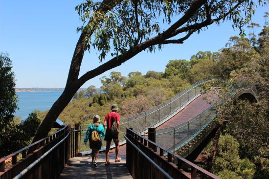 Indigenous Tours WA: Sky bridge in the botanic garden