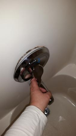 Mold In Shower Handle shower handle not secured to the wall. mold growing behind it