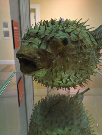 Pittsfield, MA: Berkshire Museum