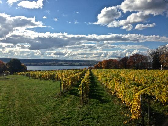 King Ferry, Nova York: Treleaven Vineyards
